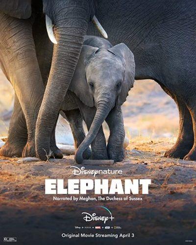 دانلود فیلم Elephant 2020 با لینک مستقیم